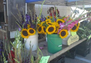 Watertown Farmers Market