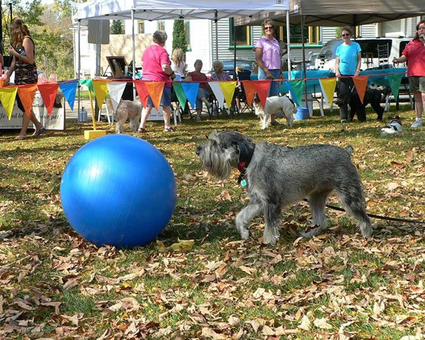Dog with blue ball at Barktoberfest in Cambridge WI