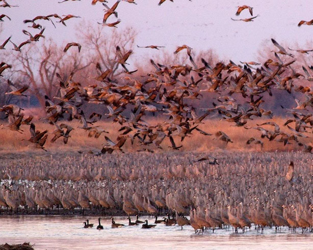 Birding in Lake Mills