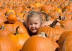 Busy Barns Autumn Adventures: Pumpkin Patch & Corn Maze