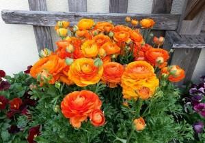 Avid Gardener Cambridge
