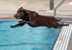 Dog Dayz of Summer