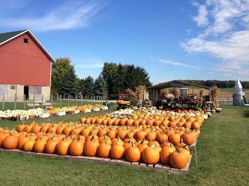 Busy Barns Autumn Adventures