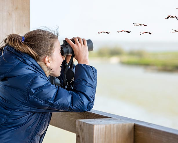 The Jefferson County Birding Beginner