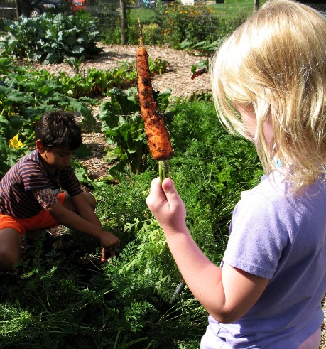 child holidng carrot from garden and another child pulling carrot out of ground