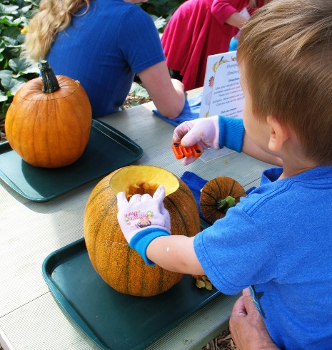 child digging inside pumpking to retrieve alphabet letters