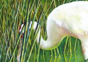 Wondrous Wetlands Watercolor Workshop