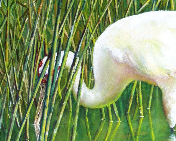 Wondrous Wetlands Watercolor Workshop