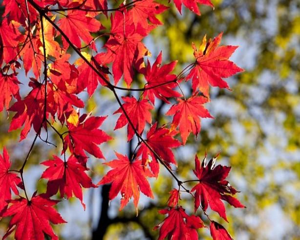 Little Sprouts Story & Strolls: Goodbye Autumn, Hello Winter