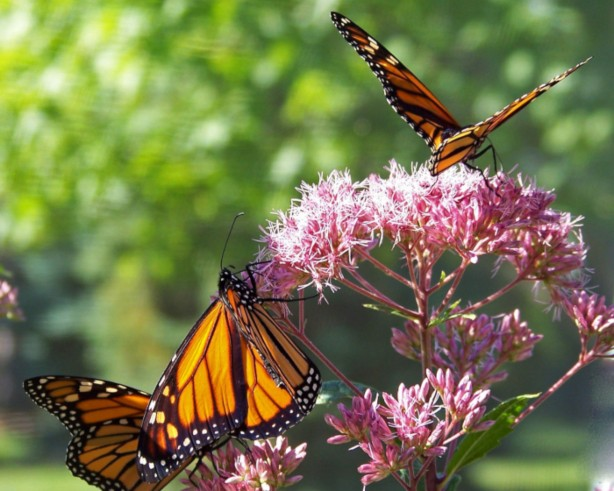 Pollinator Photography