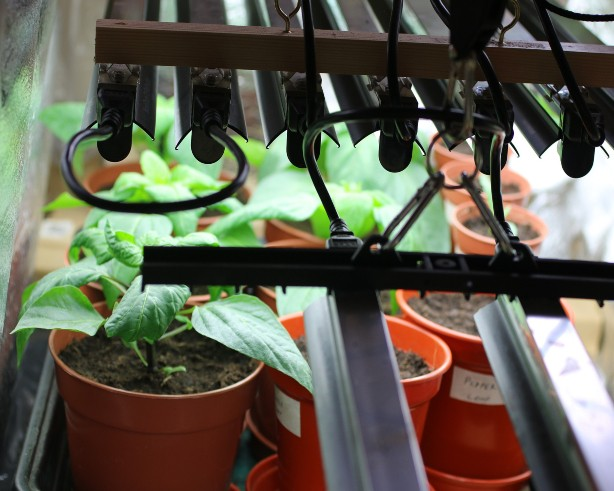 Grow Lights 101