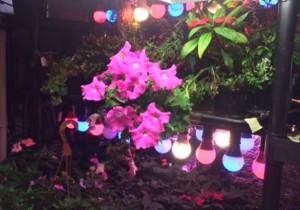 Grow Plants with LED Lights