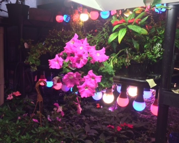 Grow Plants with LED Lights