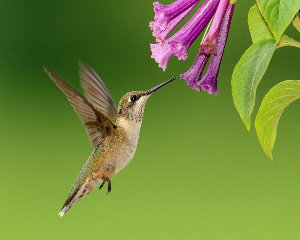 50 Best Plants for Birds