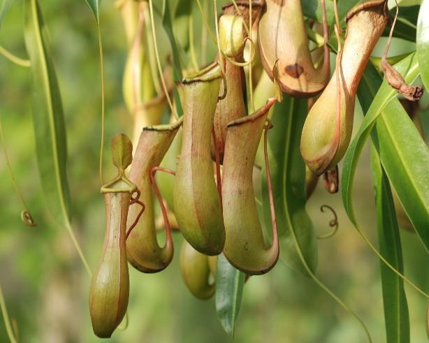 Carnivorous Plants Eat What?!